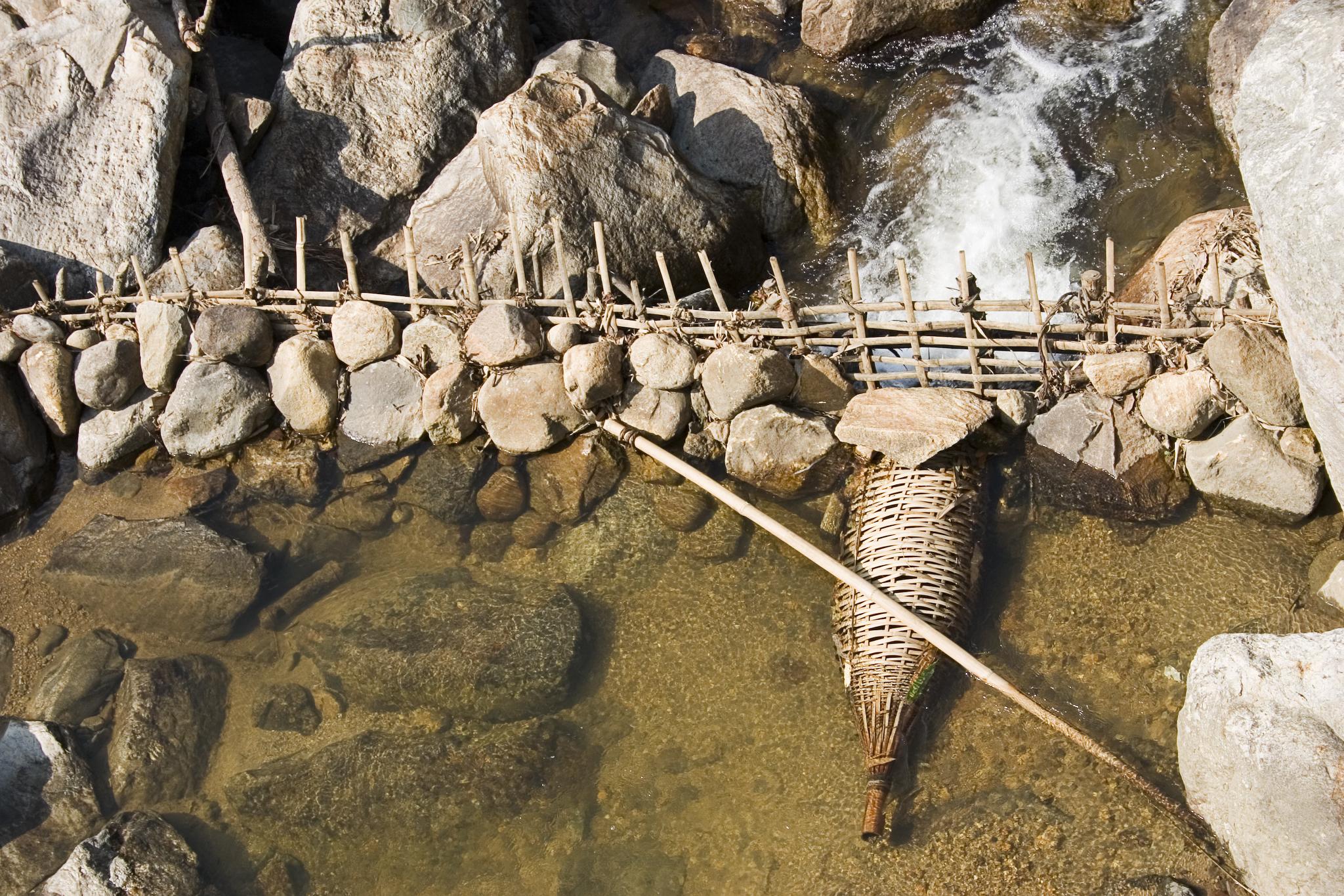 Сделать ловушку для рыбы
